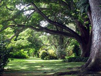 Naitauba_trees
